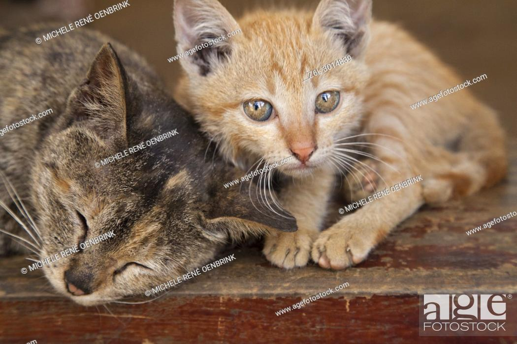 Stock Photo: Kittens in the Cat Cat Village in the valley of Sapa Vietnam.