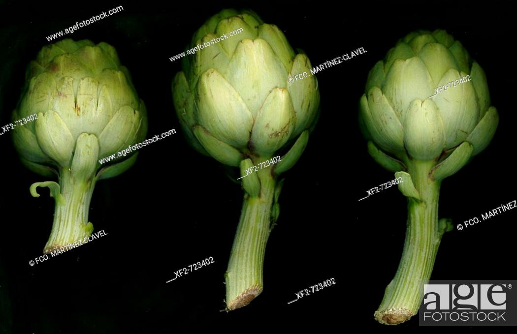 Stock Photo: Artichokes.