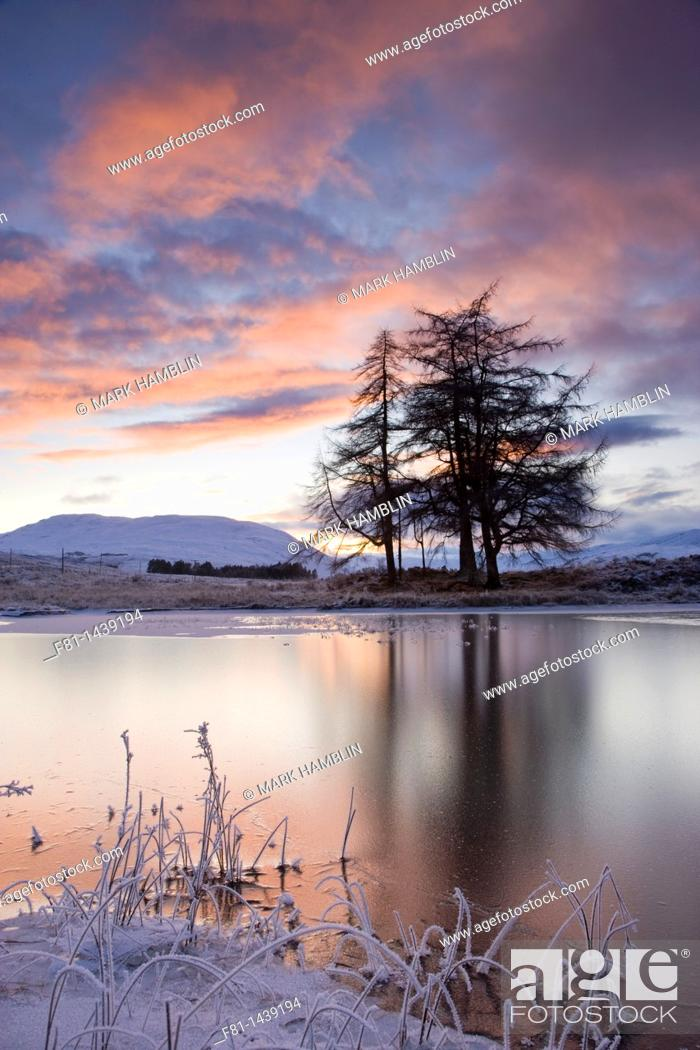 Stock Photo: Loch Tulla and larch trees at sunset, Argyll, Scotland, December.