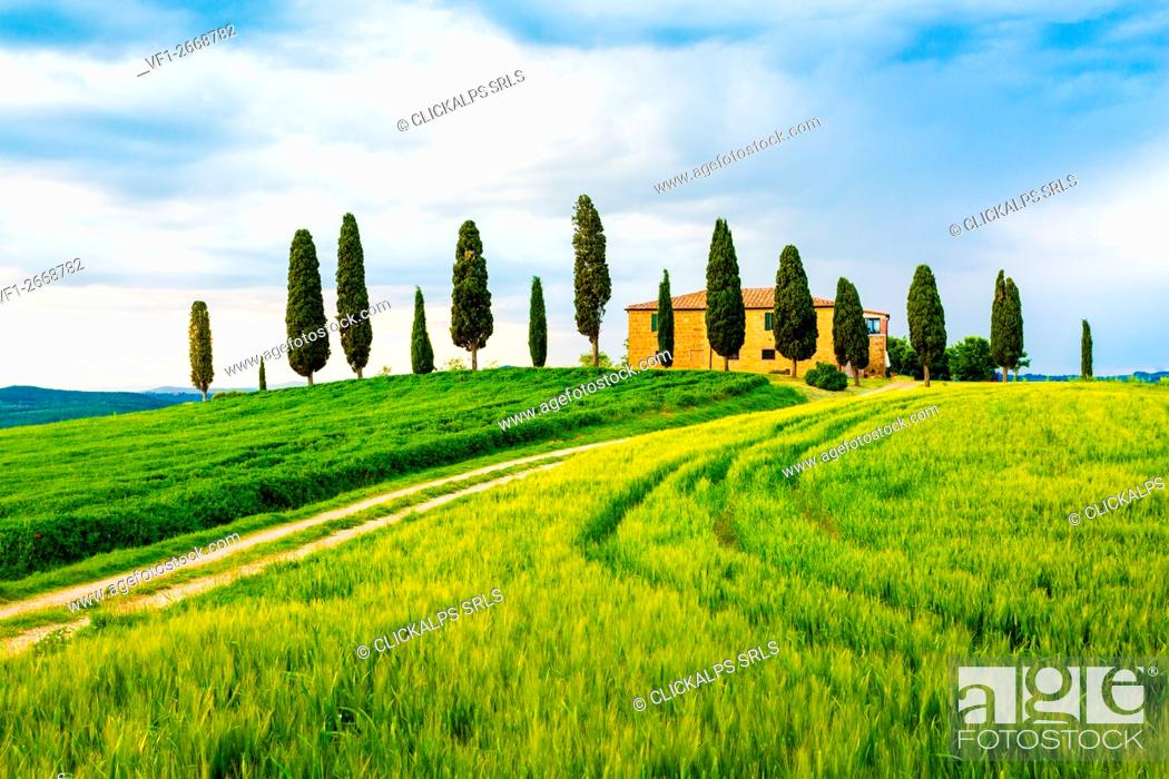 Stock Photo: Val d'Orcia, Tuscany, Italy. A lonely farmhouse with cypress trees standing in line in foreground.
