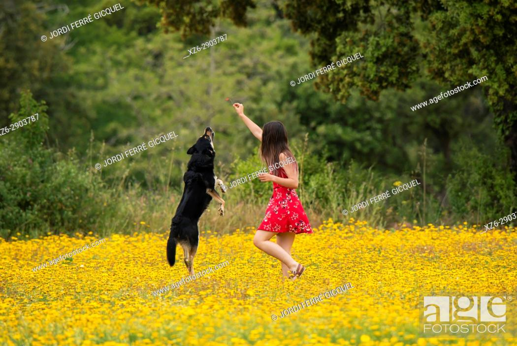 Stock Photo: Girl with a red dress playing with a dog in a yellow field.