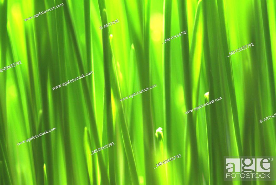 Stock Photo: Grass stalks, close-up, plants.