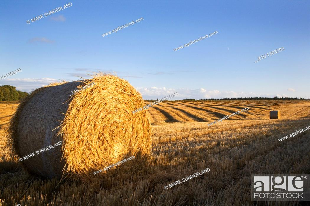 Stock Photo: Fields in the Hambleton Hills at harvest time. North Yorkshire, England.