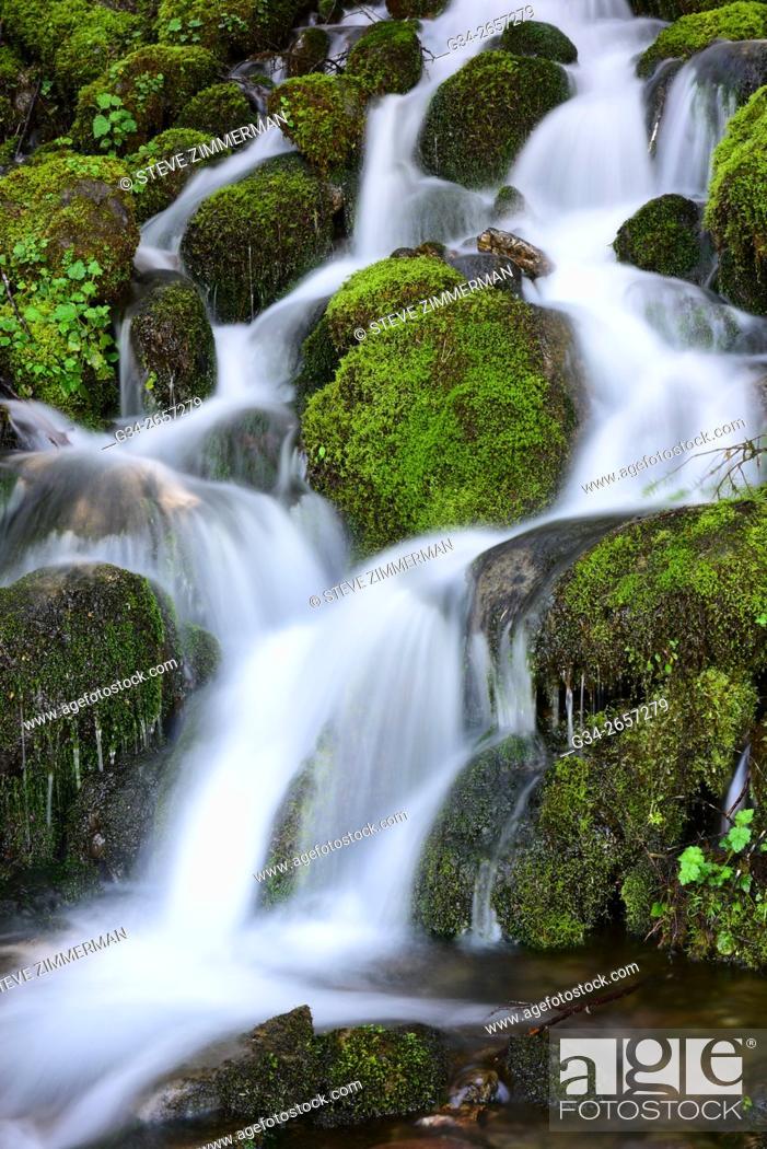 Stock Photo: Quinault Falls.