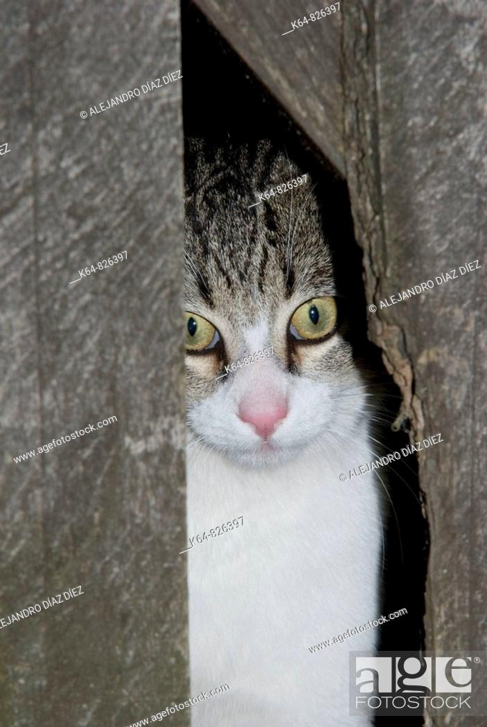 Stock Photo: Cat watching between a fence.