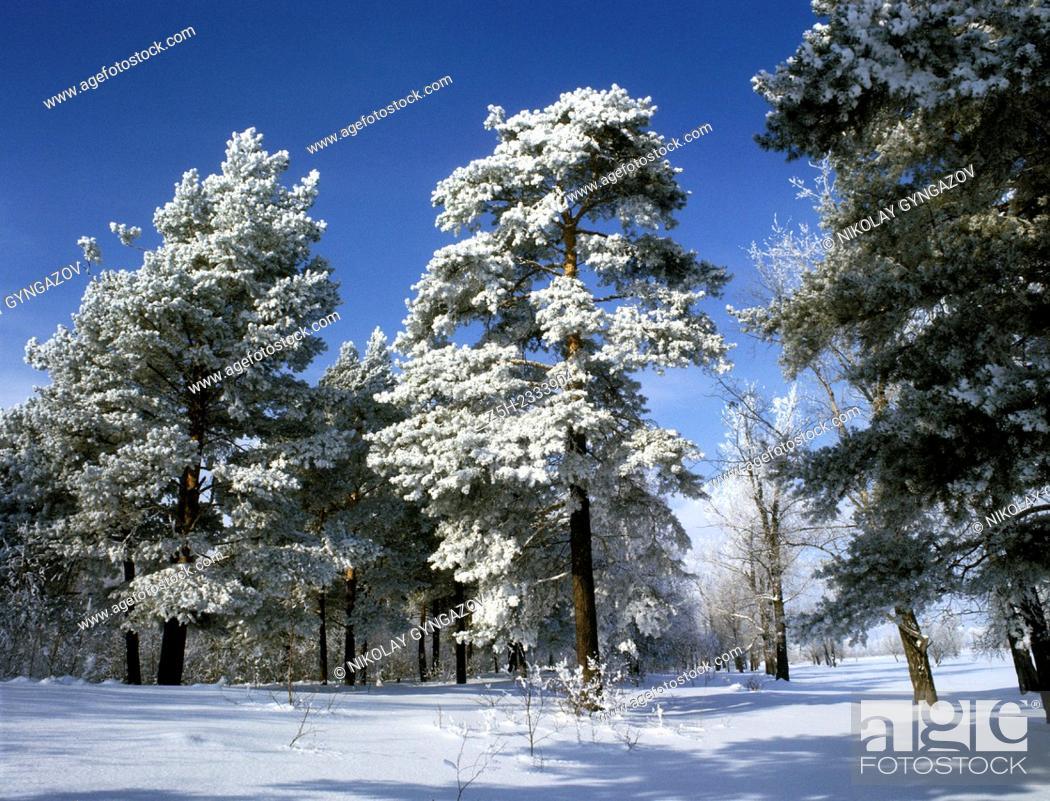 Stock Photo: Snowy expanses of Siberia.