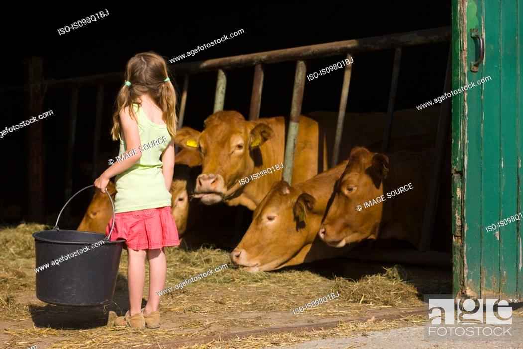 Stock Photo: A girl in a barn with cows.