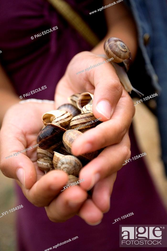 Stock Photo: Snails.