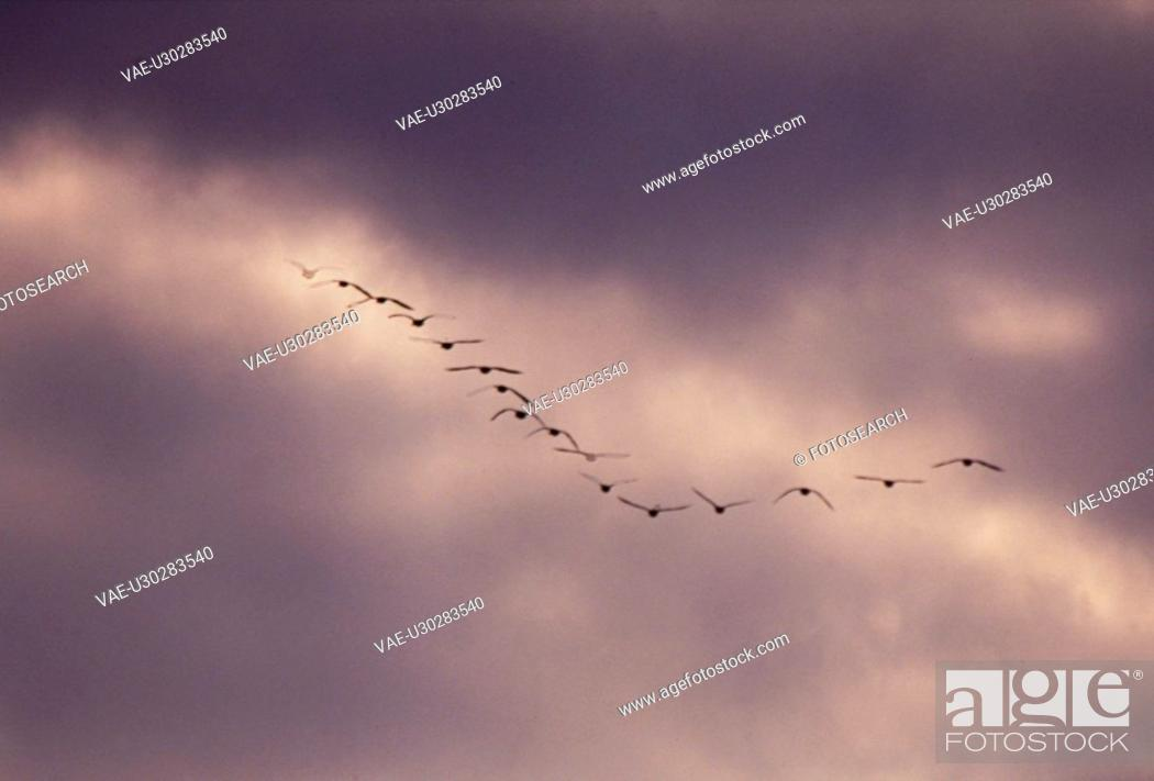 Stock Photo: flying, nature, cloud, sky, scene, wild animal, landscape.