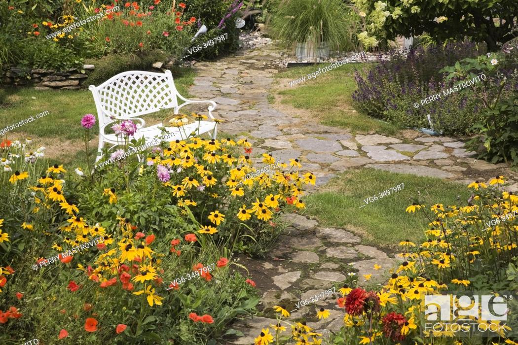 Stock Photo: Flagstone paths and borders with yellow Rudbeckia 'Indian Summer' - Coneflowers with orange Papaver 'Shirley Mother of Pearl' - Poppy flowers and white bench in.
