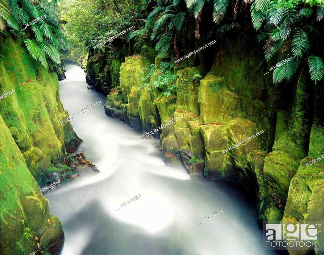 Stock Photo: Te Whaiti nui a toi Canyon Whirinaki Forest Park New Zealand.