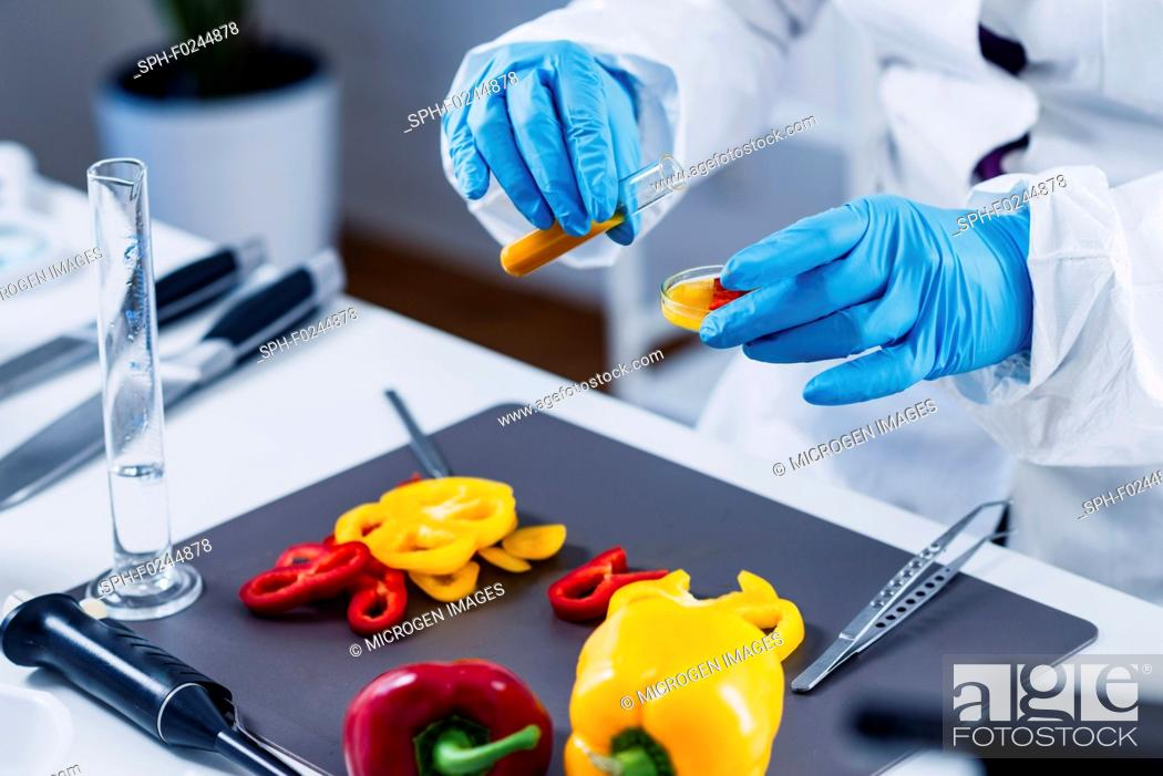 Stock Photo: Quality control food safety inspector working in a laboratory.