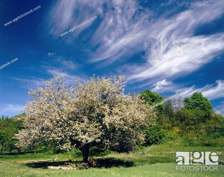 Stock Photo: Spring. Poland.