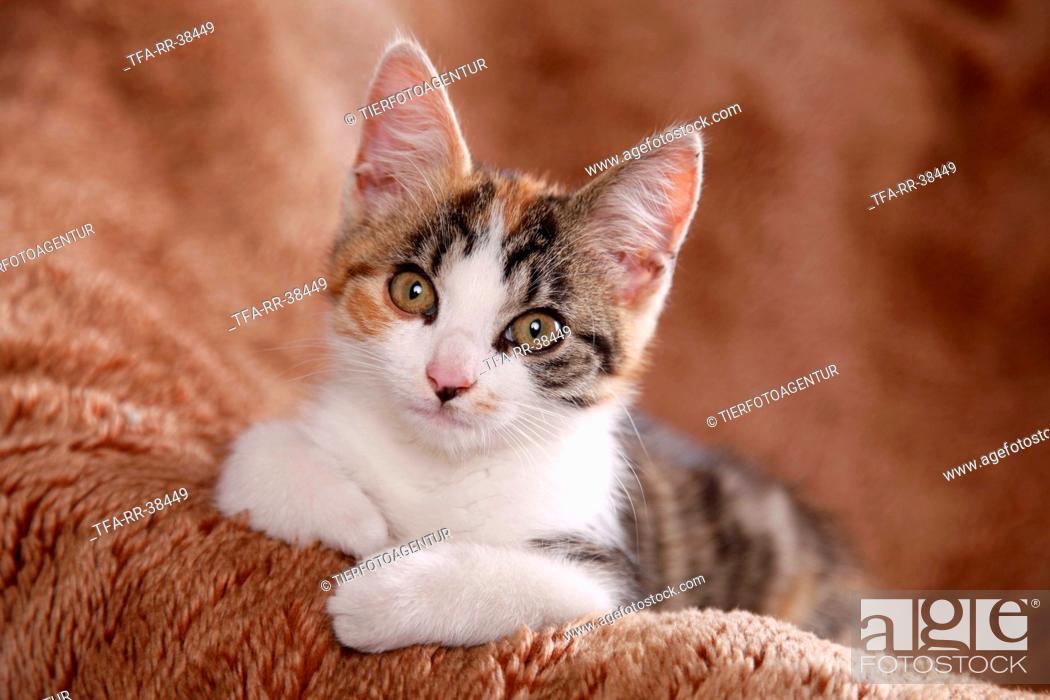 Stock Photo: lying kitten.