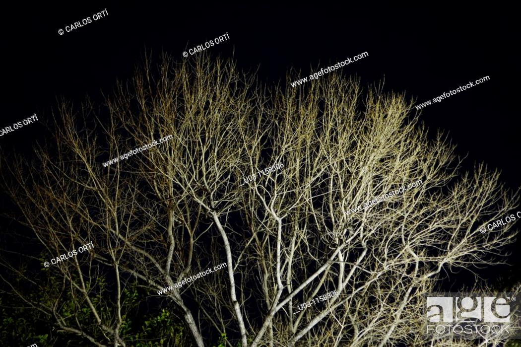 Stock Photo: Tree at night.