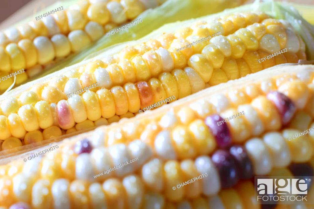 Stock Photo: Fresh organic corn on cob on farmers.