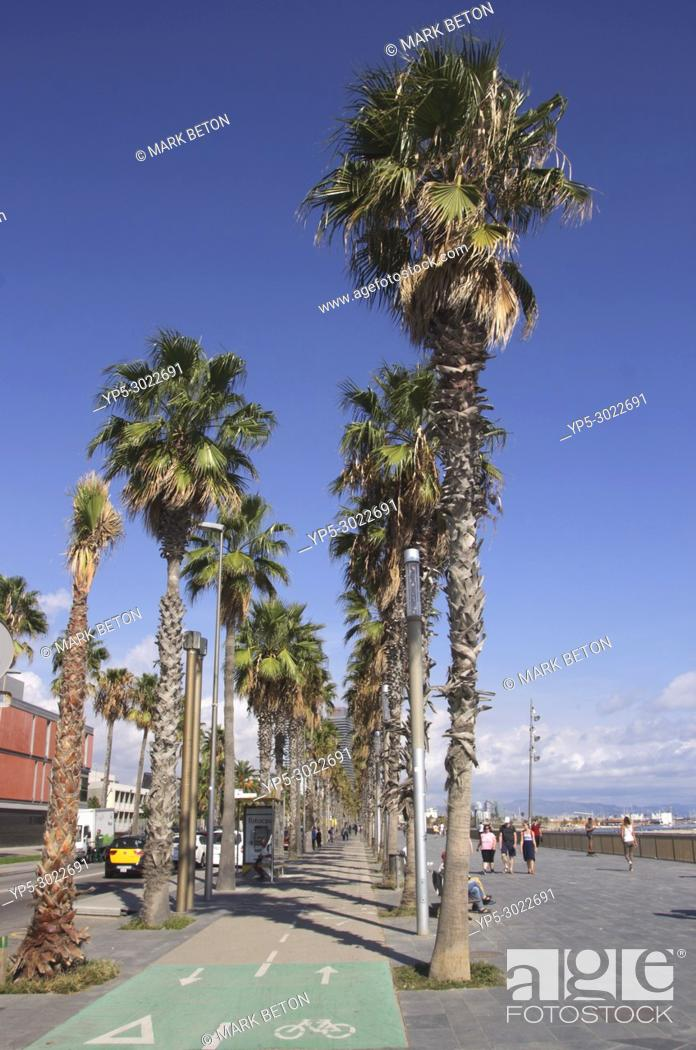 Stock Photo: Palm trees along Passeig Maritim by Barcelona beach. Spain.