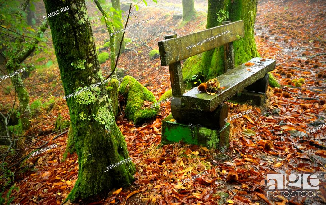 Stock Photo: Spain. Galicia. Pontevedra. Tui. Nature reserve of the Monte Aloia.