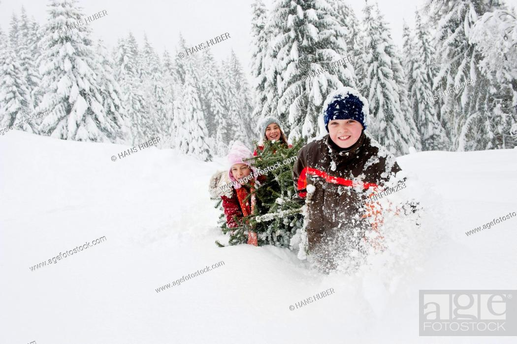 Stock Photo: Austria, Salzburg County, Boy and girl pulling christmas tree in snow.