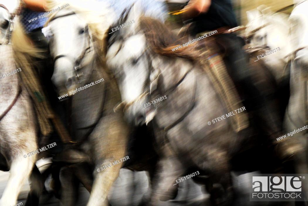 Stock Photo: Powerful Camargue white horses are raced by the Gardiens, the French cowboys of the Rhone river delta.