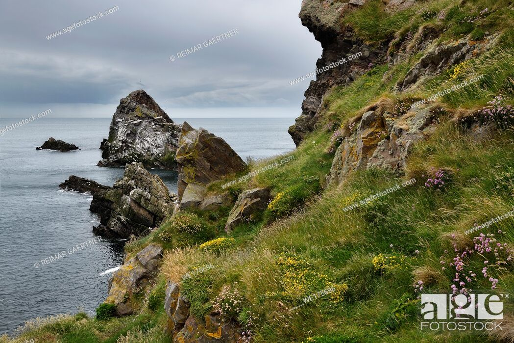 Stock Photo: Bow Fiddle Rock quartzite sea arch and rocks on cliff with Thrift Trefoil and grass at Portknockie on the North Sea Atlantic ocean Scotland UK.