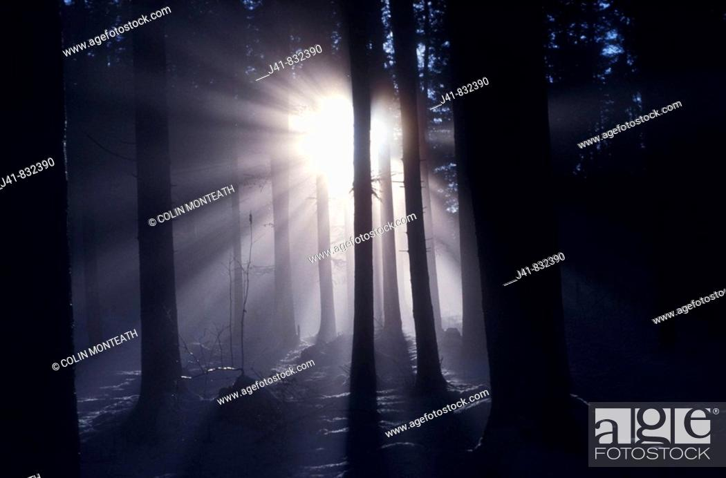 Stock Photo: Early morning fog in trees.