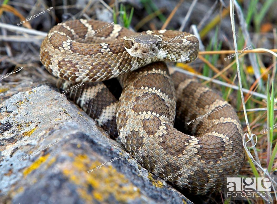 Stock Photo: Snake.