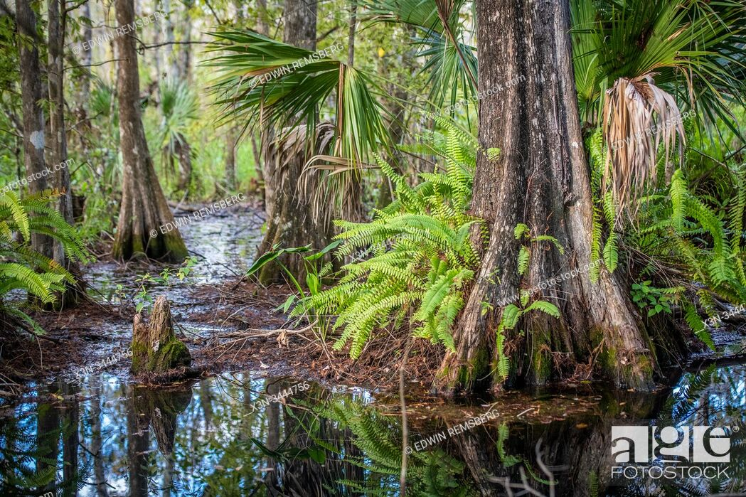Stock Photo: Vibrant flora thriving in a peaceful wetland, Naples, Florida.