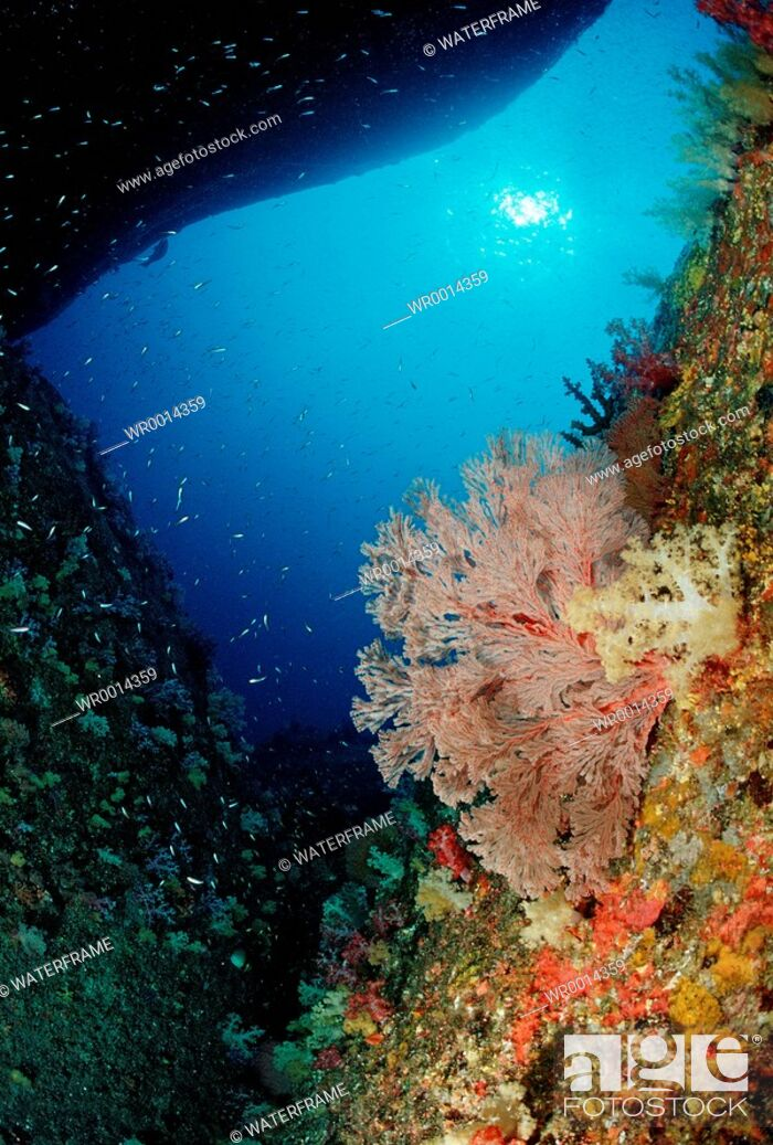 Imagen: Cave with Soft Corals, Similan Islands, Thailand.
