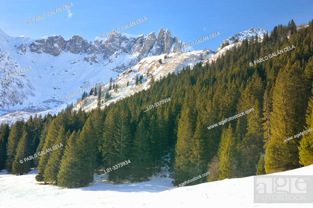 Imagen: Coniferous forest in Les Contamines valley. French Alps.