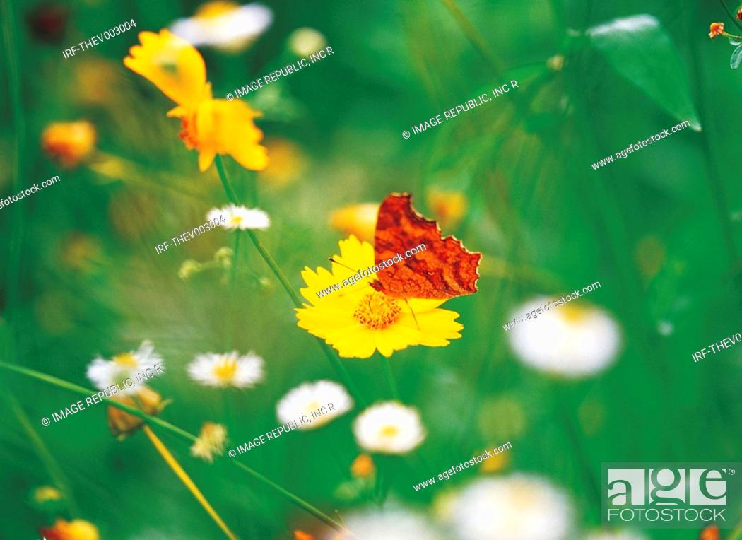 Stock Photo: butterfly and flower.