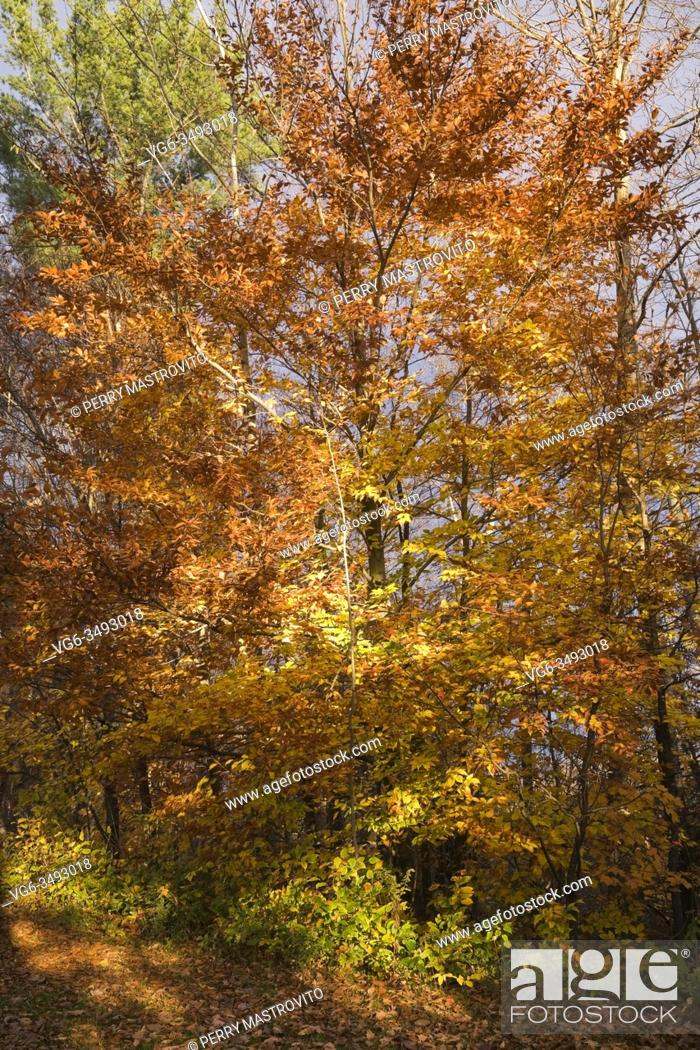 Stock Photo: Perennial shrubs and deciduous trees with fall foliage in autumn, Rawdon Falls Park, Lanaudiere, Quebec, Canada.