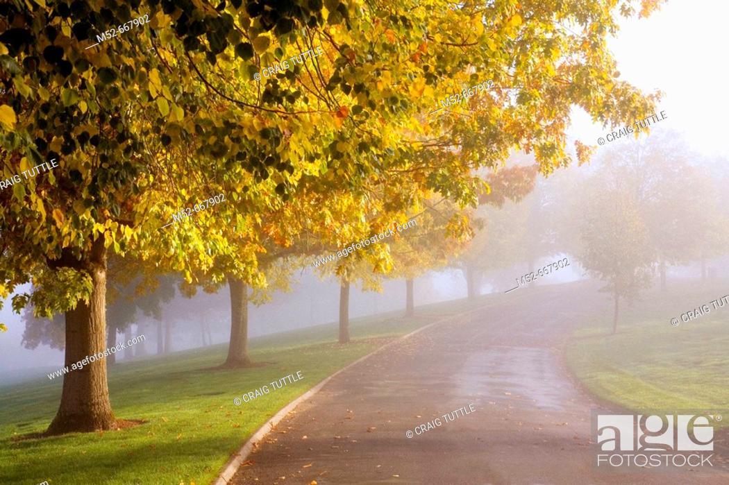 Stock Photo: Sun thru fog and trees, Happy Valley, Oregon, USA.