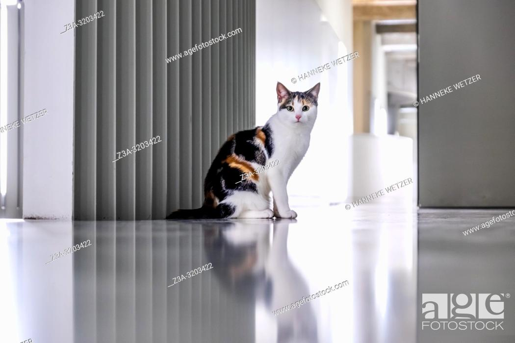 Stock Photo: Cat in the minimalistic interior of former Philips factory building Anton at Strijp-S in Eindhoven, the Netherlands.