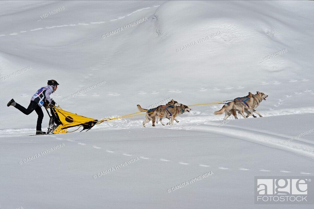 Stock Photo: International Dog Sled Race, Gadmen, Bernese Oberland, Switzerland.