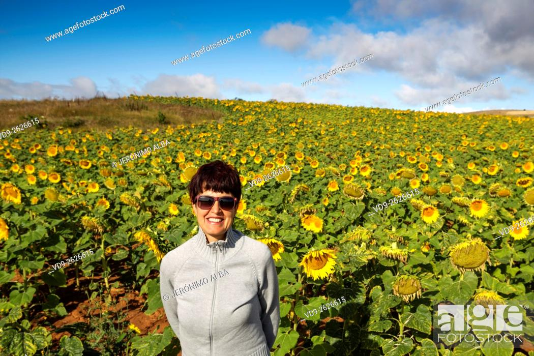 Stock Photo: Woman sunflowers field, Burgos Castilla Leon. Spain.