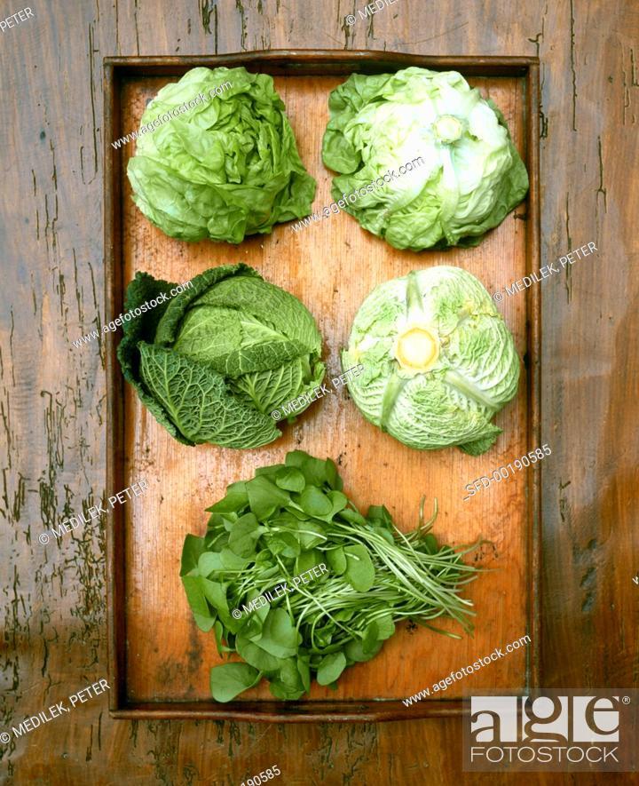 Stock Photo: Still life with purslane, savoy and lettuce.