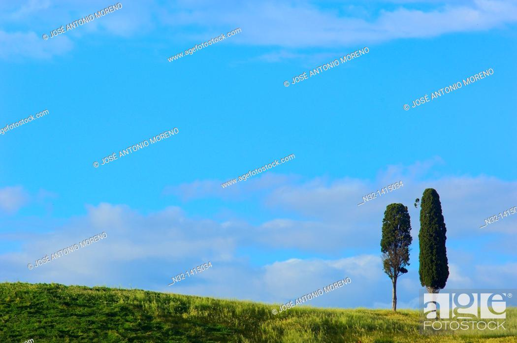 Stock Photo: Fields and cypress trees, Tuscany landscape, Val d'Orcia, UNESCO world heritage site, Pienza, Siena Province, Tuscany, Italy.
