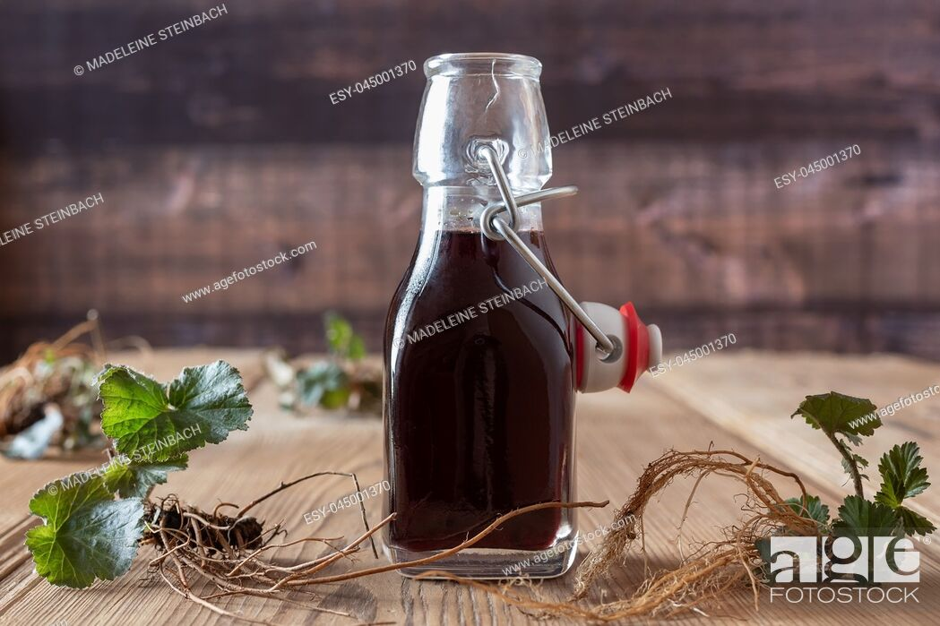 Stock Photo: Bottle of red wine in which roots of young Geum urbanum plants have been macerated, according to an old recipe of Hildegard of Bingen.