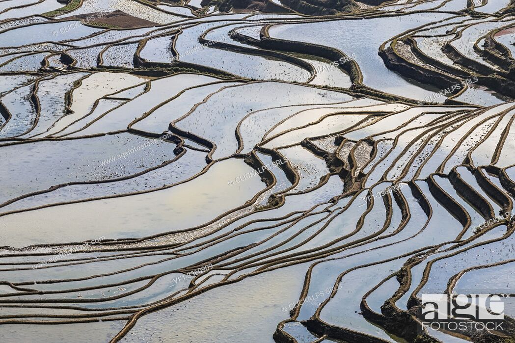 Stock Photo: YuanYang rice terraces in Yunnan, China, one of the latest UNESCO World Heritage Sites.