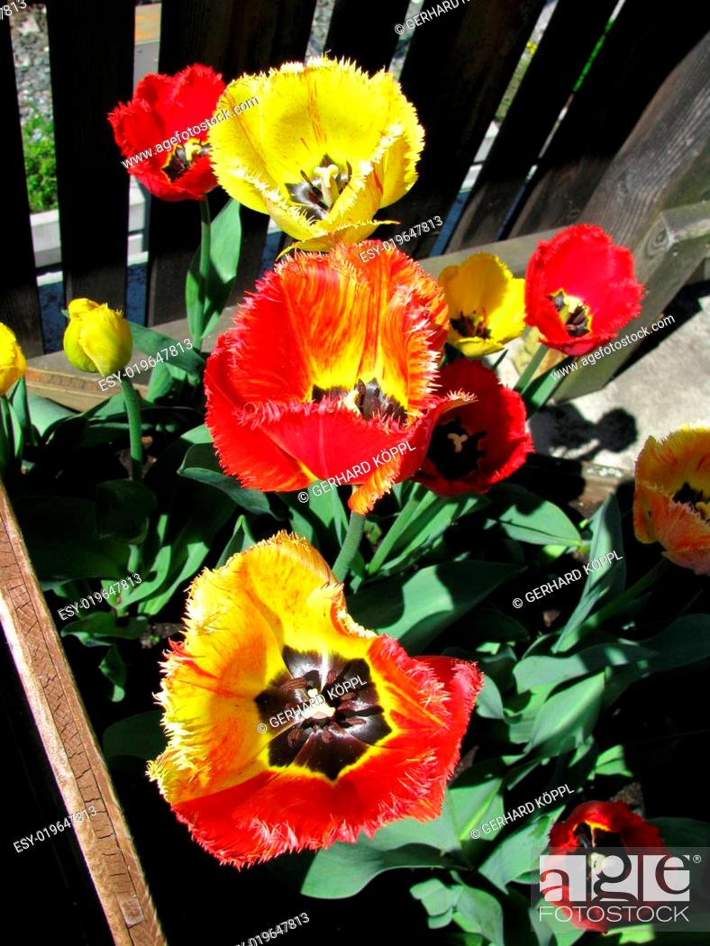 Stock Photo: Siefmuetterchen auf dem Balkon.