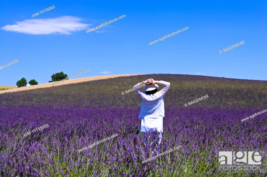 Stock Photo: A woman standing in lavender field, Provence-Alpes-Cote d'Azur, Plateau De Valensole, France.
