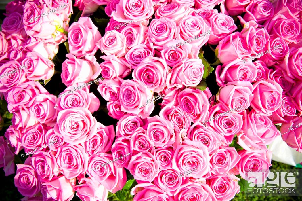 Stock Photo: Pink roses.