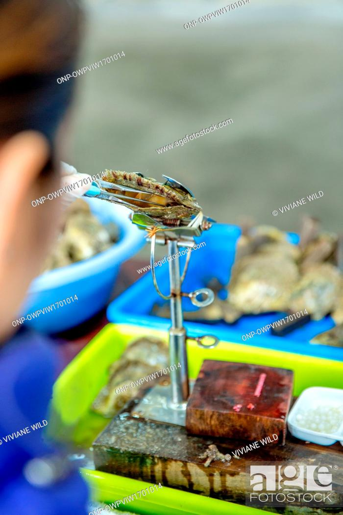 Stock Photo: Vietnam, Qu?ng Ninh, Thành ph? H? Long, Legend Pearl Halong Bay. Pearl farm in the Halong Bay. Oyster farming and oyster pearls.