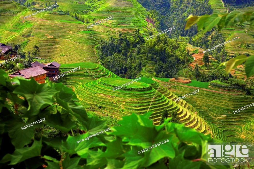 Stock Photo: High angle view of terraced rice fields, Jinkeng Terraced Field, Guangxi Province, China.