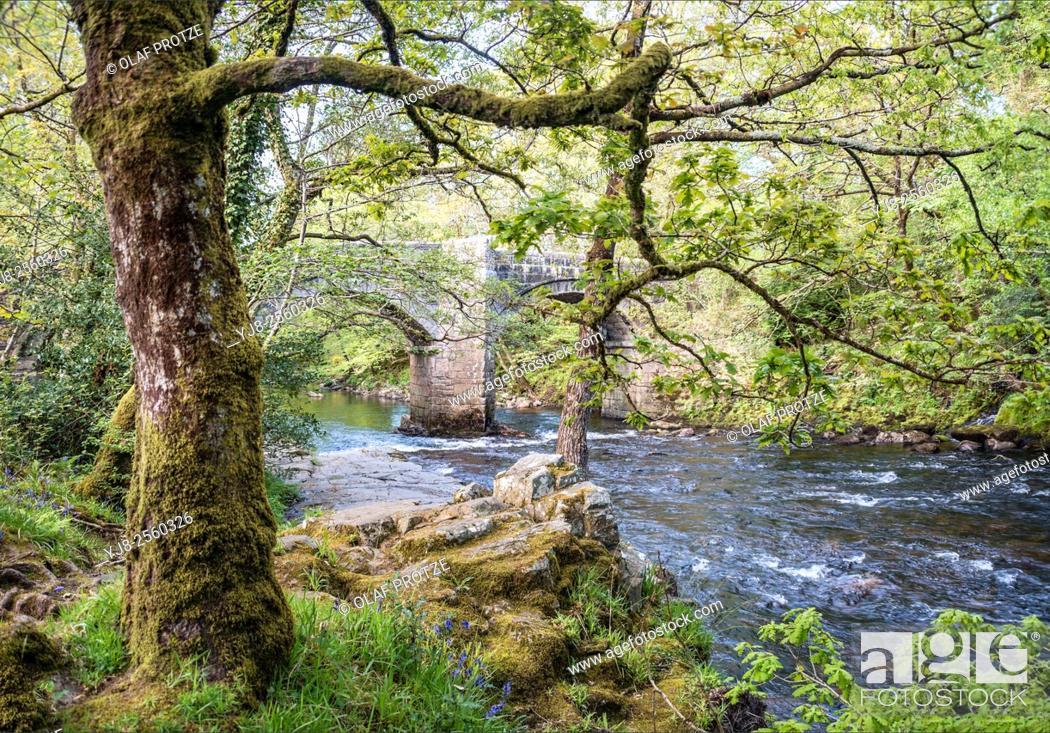 Stock Photo: Riverside oak forest at the Dartmoor National Park, Devon, England, UK.