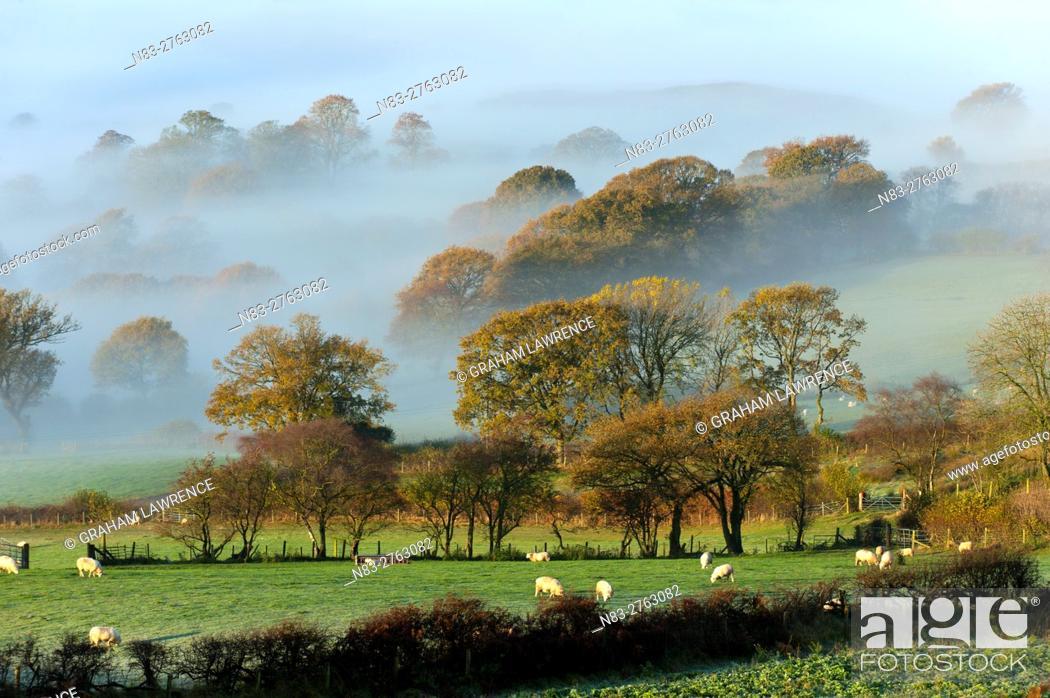 Stock Photo: Misty valley landscape at sunrise near Llandrindod Wells, Powys, Wales, UK.