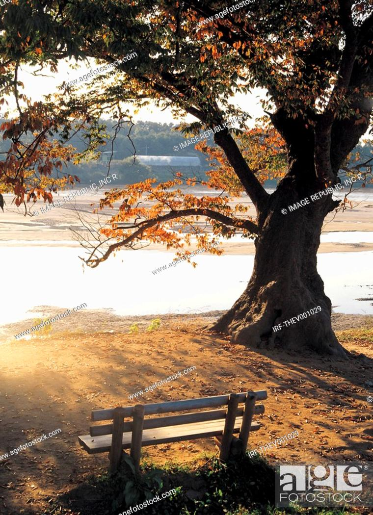 Stock Photo: bench beside tree in the river bank.