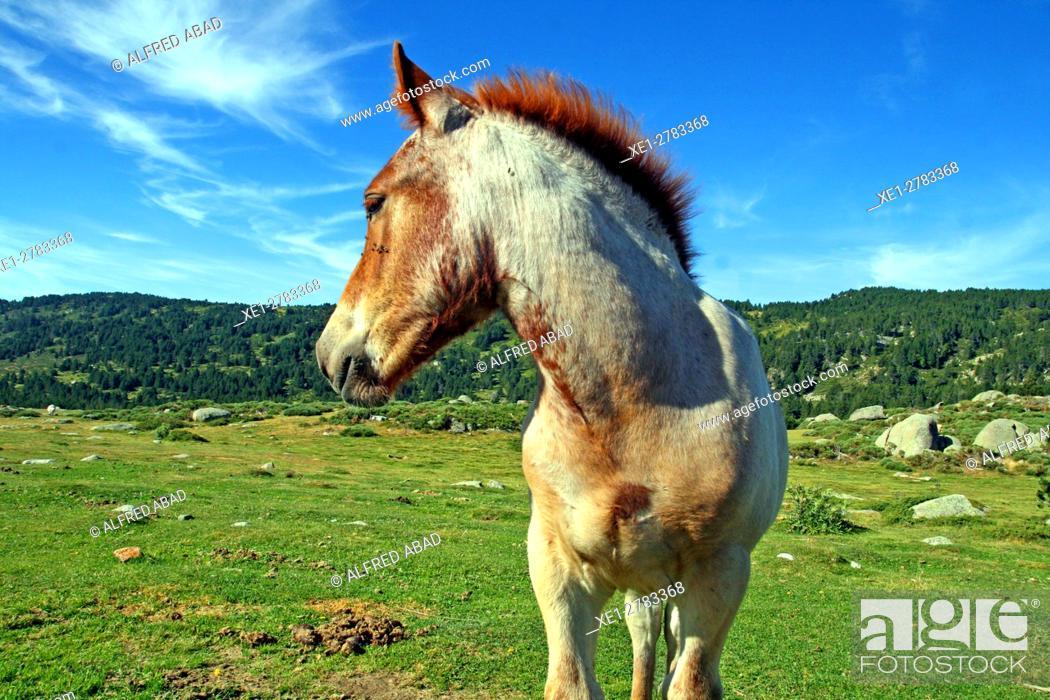 Stock Photo: Horse, Lac des Bouillouses, France.