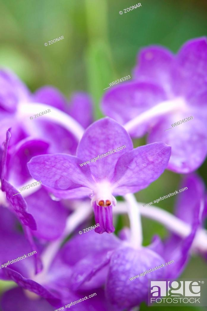 Stock Photo: Selection beautiful orchid.